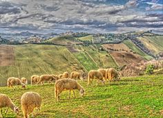 Holidays in Le Marche, Italy