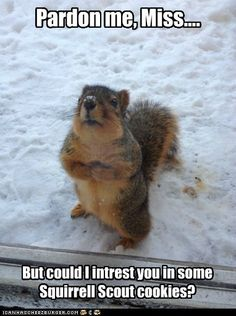 Squirrell Scout Cookies