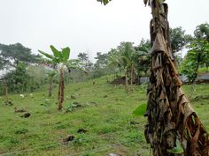 Rebuilding forest areas in Costa Rica: provides habitat for wild life and shows students on organic food production