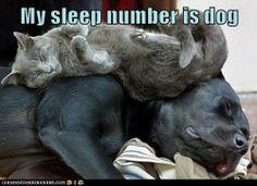 My sleep number is dog
