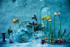 FLOWERS BY DENISE GRÜNSTEIN