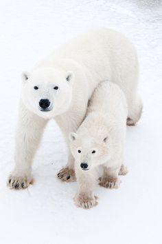 I want to see polar bears!