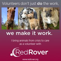 Volunteers don't just *do* the work, we make it work! Cheers to all of our RedRover volunteers. #NationalVolunteerWeek