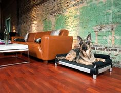 Customize your dog's snoozeSofa to compliment your own home's decor. http://bit.ly/wbfRGY  Is this fabulous or what!