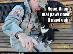 """""""Nope, I'm putting my paw down. You're not going."""" (Soldier's Kitty)"""