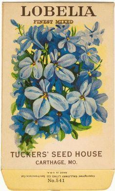 Vintage Flower Seed Packet Tuckers Seed House Lithograph LOBELIA (Carthage, Missouri)