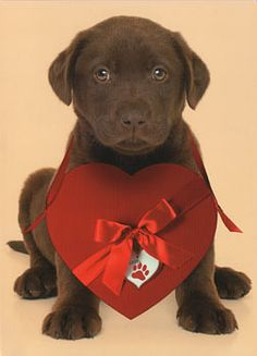 Nothing says love like a lab!