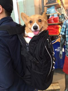 corgi backpack.  (link goes to 4 images)