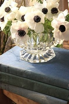 Anemones in glass bowl