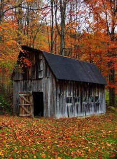 color, autumn barn, grey barn, falling leaves with barns, old barns, barn houses