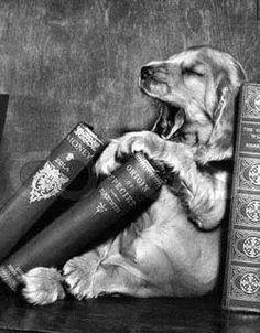 bedtime stories, books, puppies, anim, bedtim stori, pet, librari, read, dog