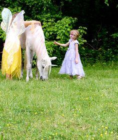 meeting the unicorn