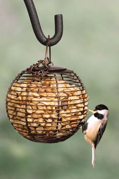 Chickadees love peanuts! This Peanut Ball Feeder from Wild Birds Unlimited is easy to fill and hang, and it will accommodate all of your nut-eating birds, such as chickadees, woodpeckers and nuthatches.