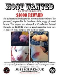 "$1000 Reward~Justice Rescue. 2 pit bull pups arrived at Conchester Animal Hosp Dec 21, by a man & woman wearing surgical gloves. The cut on the 3-wk pup was a deep, thin slice down to the chest cavity-the couple admitted it was part of pain-conditioning to prepare the puppy for dog fighting-they couldn't afford vets costs so would ""throw them somewhere."" Michele Lord followed them & pleaded to let her adopt the puppies.She got the male but they kept the other pup. CALL:215-942-6363 WITH ANY INFO"