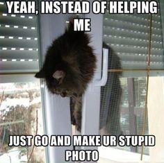 Funny Cat Stuck Betw...