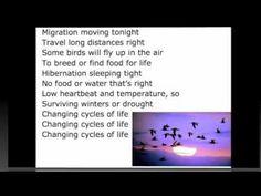 Life Cycles Song