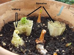 16 Common Vegetables You Can Regrow