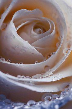 Raindrops on Roses....