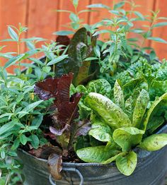 To ensure you have a constant supply of food from garden to table, try Succession Planting ... 'Sow Little & Often.' Pick 'n' pluck salad greens are a good fast growing choice to start with. | The Micro Gardener