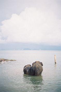 #elephants