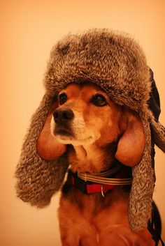 I need to get this hat for my Beagles.