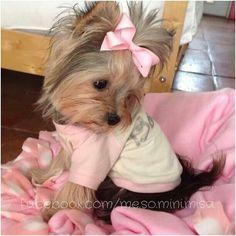 Sweet Misa Minnie