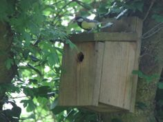 Maybe the term busy bee should be busy bird! The Great Tit chicks in this nest box are being fed 48 times an hour, wow! Can you imagine feeding your young that many times an hour? Wenlock Edge in Shropshire via facebook. 16 May