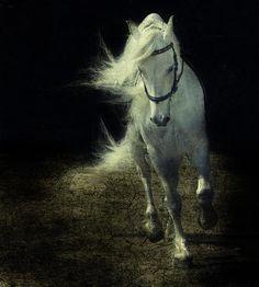 White stallion.