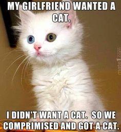 kitty cats, van, anim, eye colors, funni, white cats, green eyes, kittens, blues