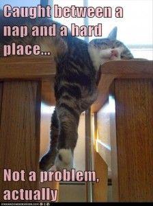 funny cat nap The equilibrium of felines is quite amazing!