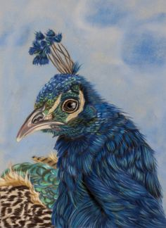 Peacock pastels by Sarahharas07 on deviantART