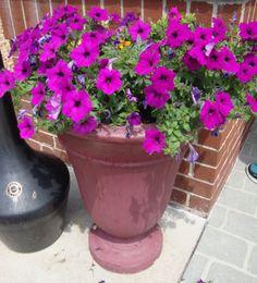 How to Make a Beautiful Flower Pot Arrangement
