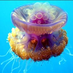 Jelly belly ocean animals #best  #sea #meditative #ocean #animals #interesting #beautiful #things