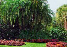Florida Landscape Architect | Island Landscaping, Inc.