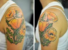 love california poppies