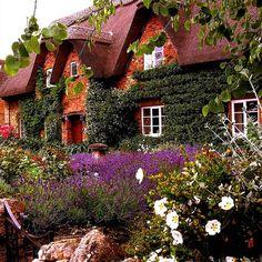 england, dream cottag, cottag garden, cottage gardens, garden cottage