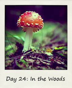 Library Girl Reads & Reviews: In The Woods #BlogFlash2012 Day 24