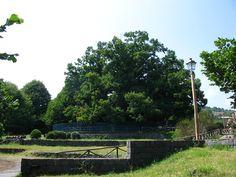 Chestnut Tree of One Hundred Horses, Sicily, http://bit.ly/1bXYFQr