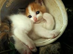 :-) cats, anim, kitten, du journal, bulbs, blog, kitty, cat album, bowls