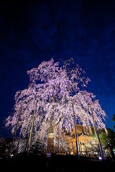 To-ji Temple #japan #kyoto