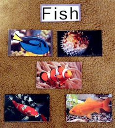 Fish related activities, book suggestions, free printables and online resources for a preschool ocean theme!