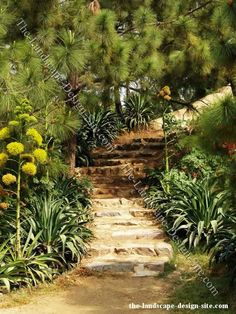 hillsid step