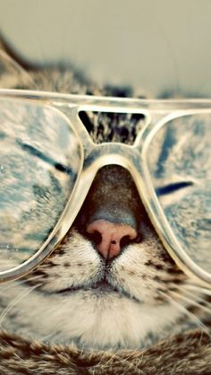 hipster, cat in glasses, kitty cats, anim, kitten, fashion plates, cat naps, bakers, eye