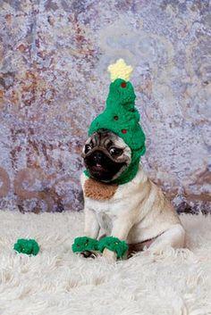 christmas pug. his face makes me laugh
