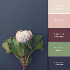 Build your brand: 20 unique color combinations to inspire you – Canva
