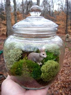 Biscuit Jar Terrarium Glass Bunny and Turtle by MossTerrariums~These are so neat. My mom has done these in the past for the spring.