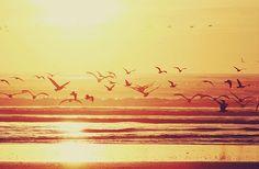 The ocean (: