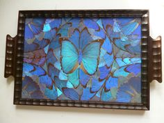 Antique Morpho Butterfly Wing Serving Tray Brazil | eBay, sold for  $157.50