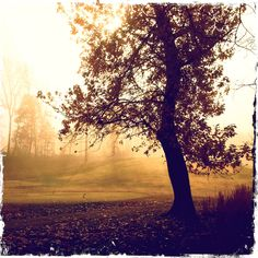 Fall on the golf course.