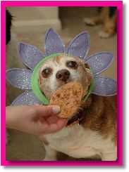 Easter Carrot Cookie Dog Treat Recipe